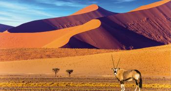 DESIERTOS DE NAMIBIA