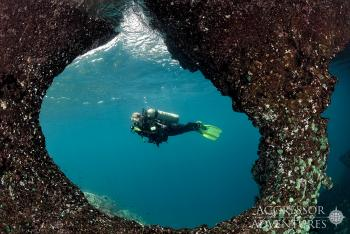 BUCEO EN TRAWANGAN DIVE RESORT INDONESIA